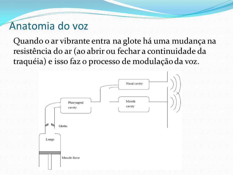 Anatomia do voz