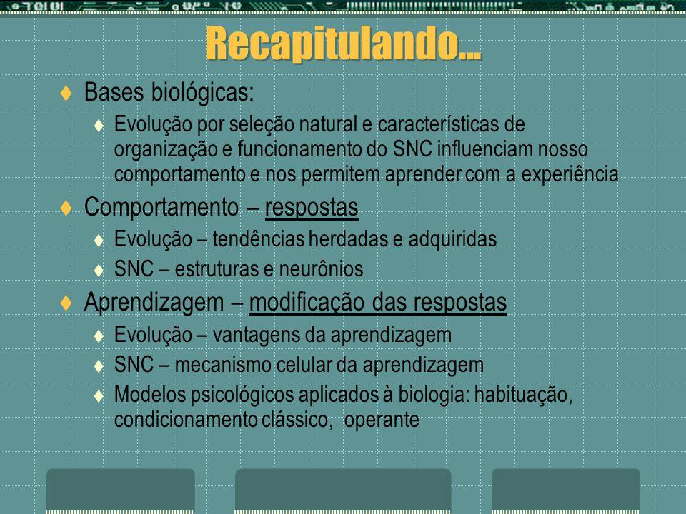 Recapitulando... Bases biológicas: Comportamento – respostas