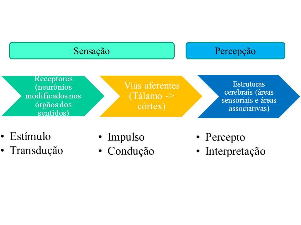 Estímulo Transdução Impulso Condução Percepto Interpretação