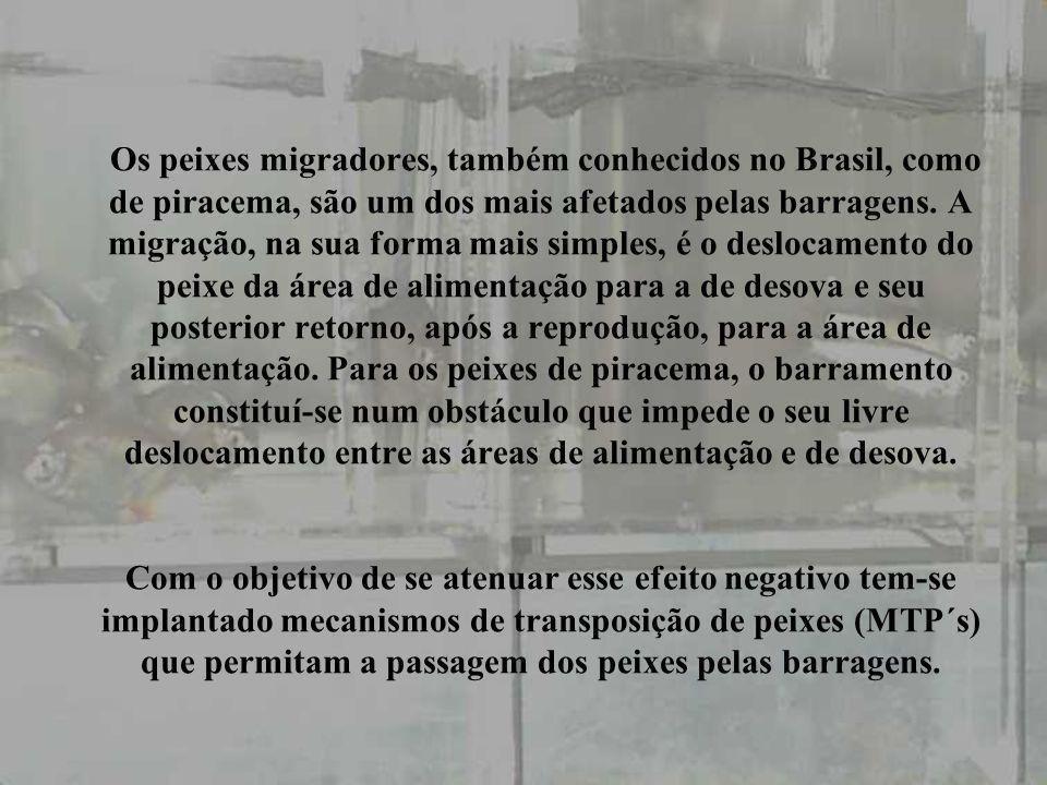Os peixes migradores, também conhecidos no Brasil, como de piracema, são um dos mais afetados pelas barragens.