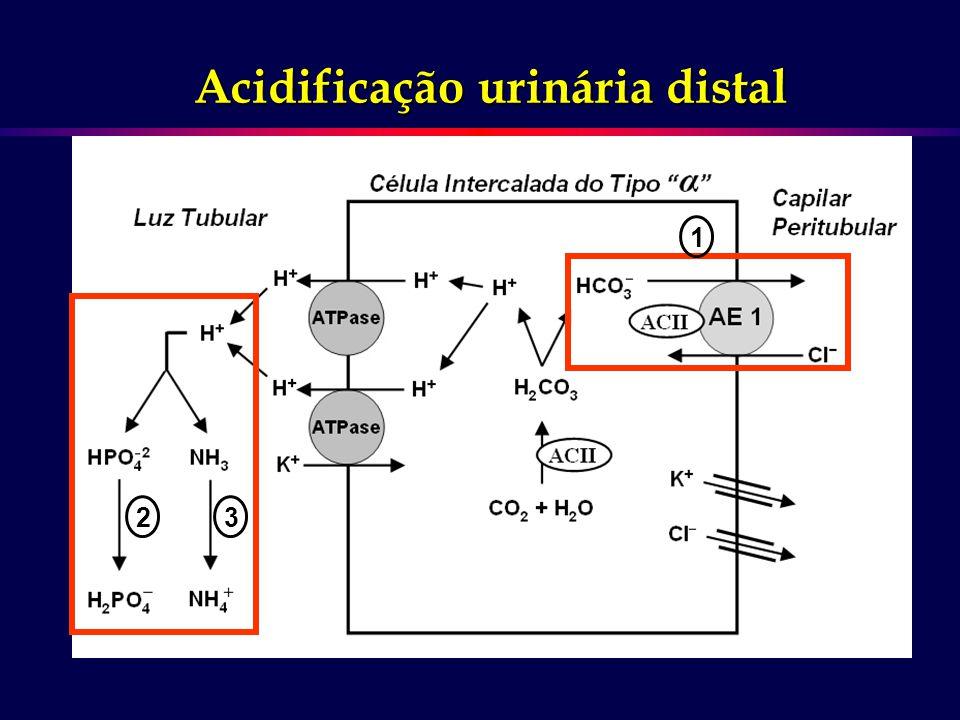Acidificação urinária distal
