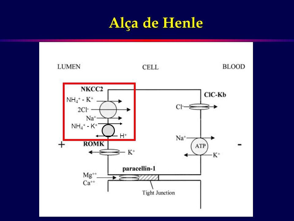 Alça de Henle NH4+ - NH4+ - K+ H+