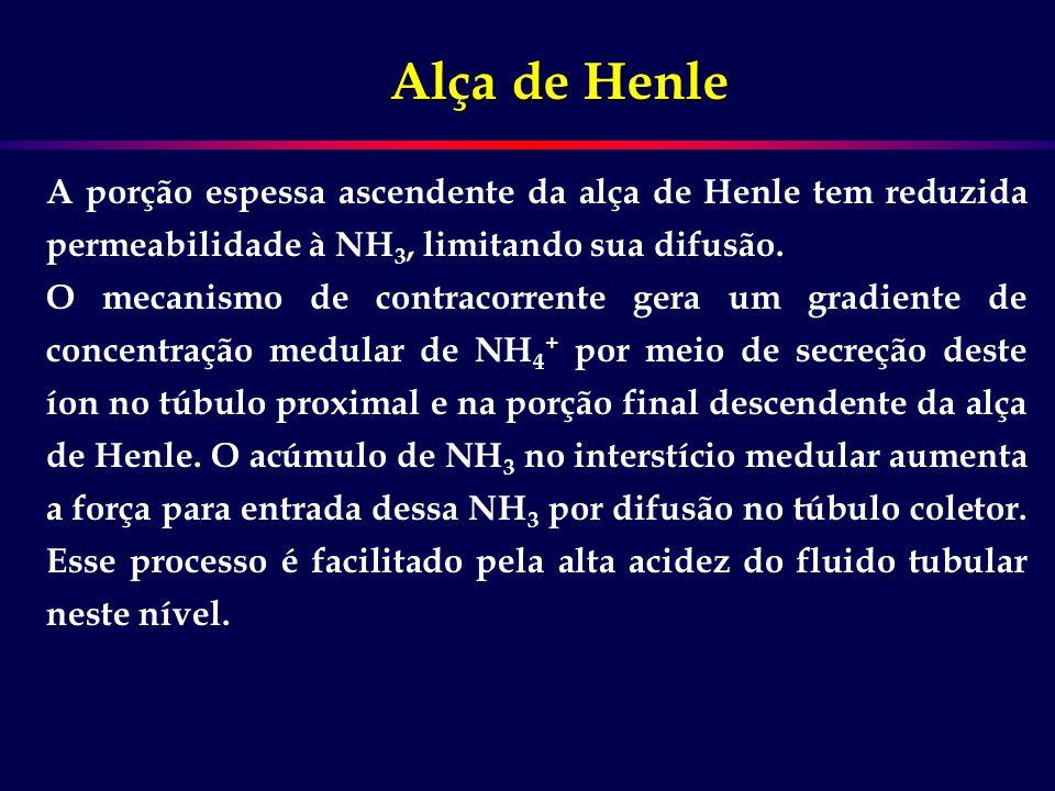 Alça de Henle A porção espessa ascendente da alça de Henle tem reduzida permeabilidade à NH3, limitando sua difusão.