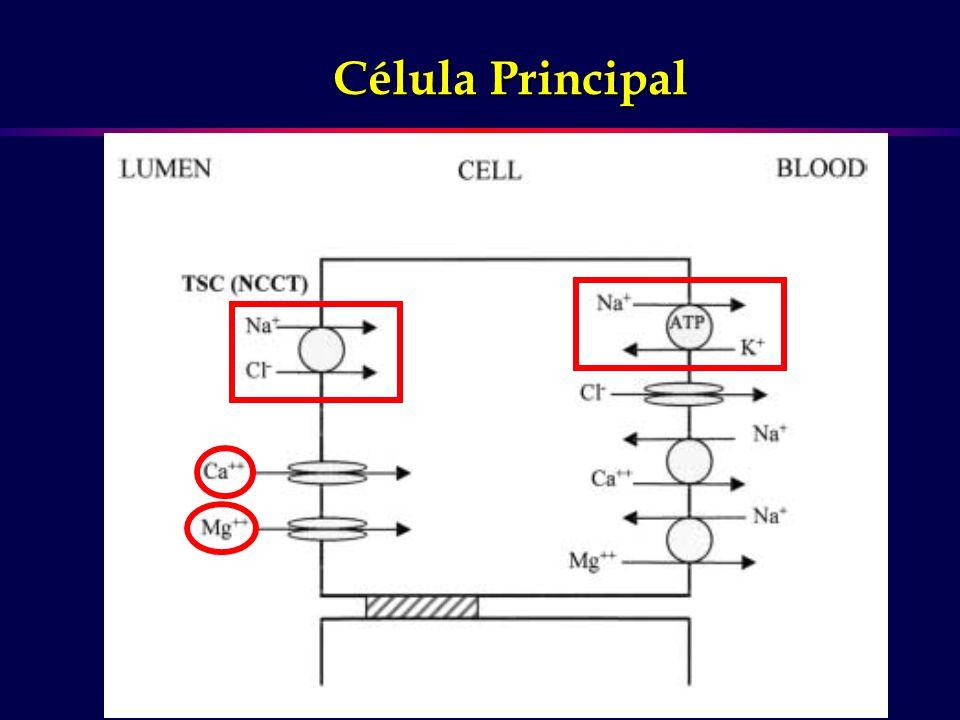 Célula Principal
