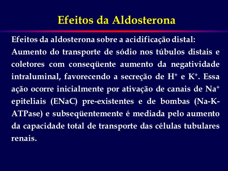 Efeitos da Aldosterona