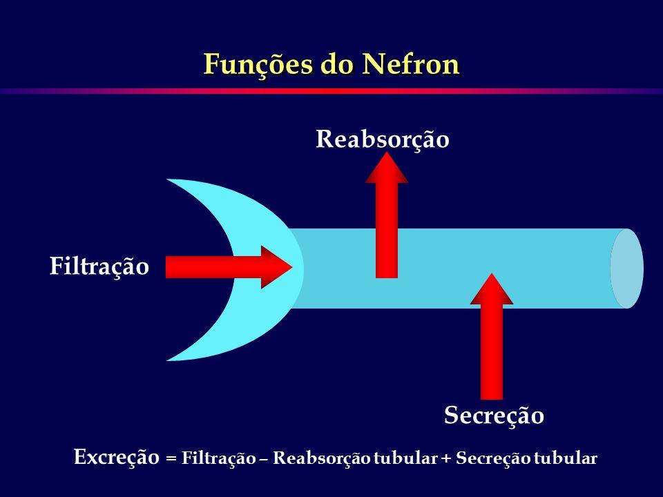 Funções do Nefron Reabsorção Filtração Secreção