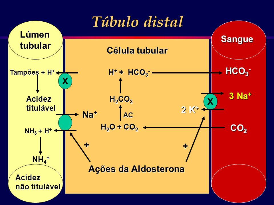 Túbulo distal Lúmen Sangue tubular Célula tubular HCO3- X 3 Na+ X 2 K+