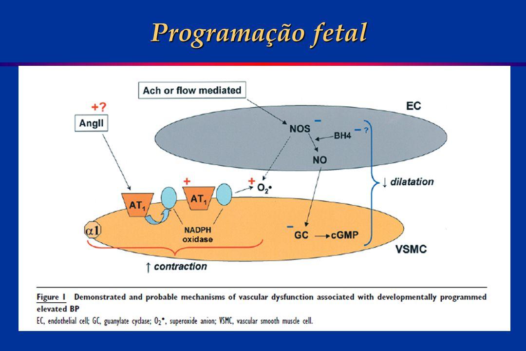 Programação fetal