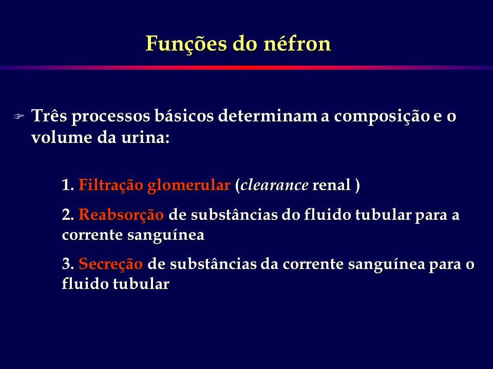 Funções do néfron Três processos básicos determinam a composição e o volume da urina: 1. Filtração glomerular (clearance renal )