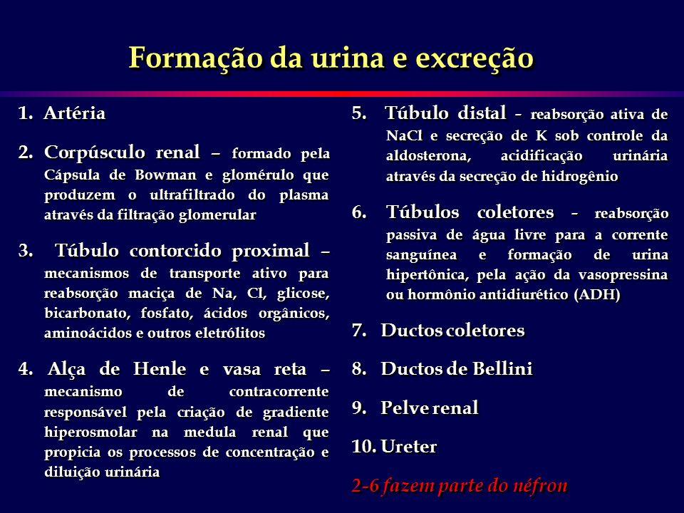 Formação da urina e excreção