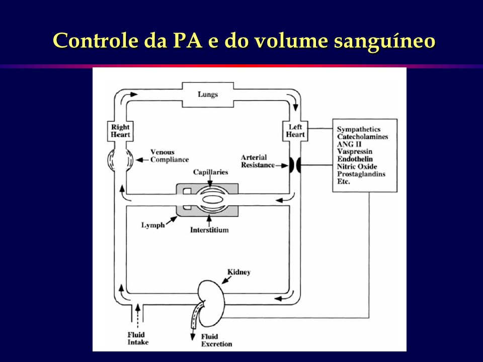 Controle da PA e do volume sanguíneo