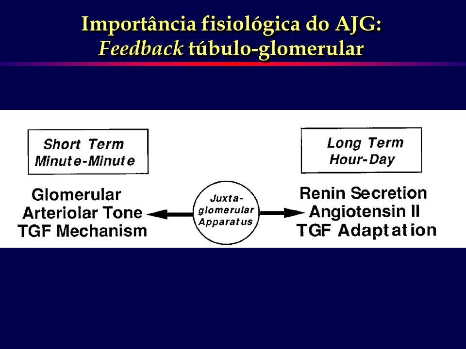 Importância fisiológica do AJG: Feedback túbulo-glomerular