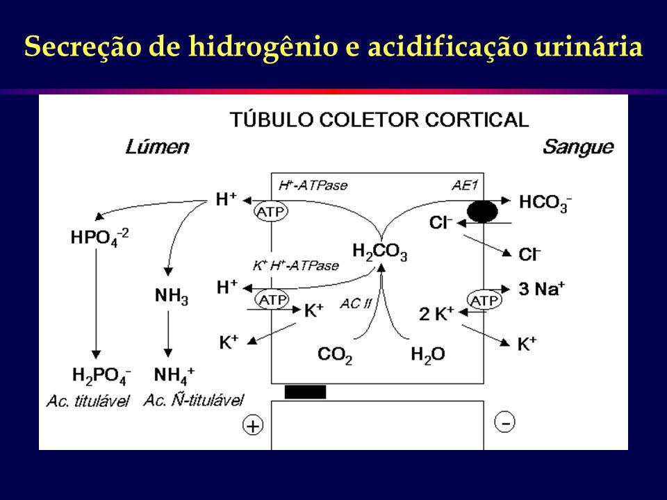 Secreção de hidrogênio e acidificação urinária