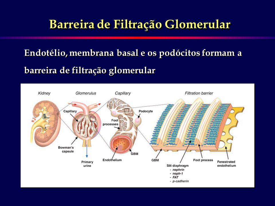 Barreira de Filtração Glomerular