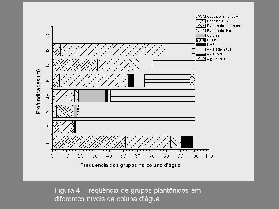 Figura 4- Freqüência de grupos plantônicos em diferentes níveis da coluna d'água