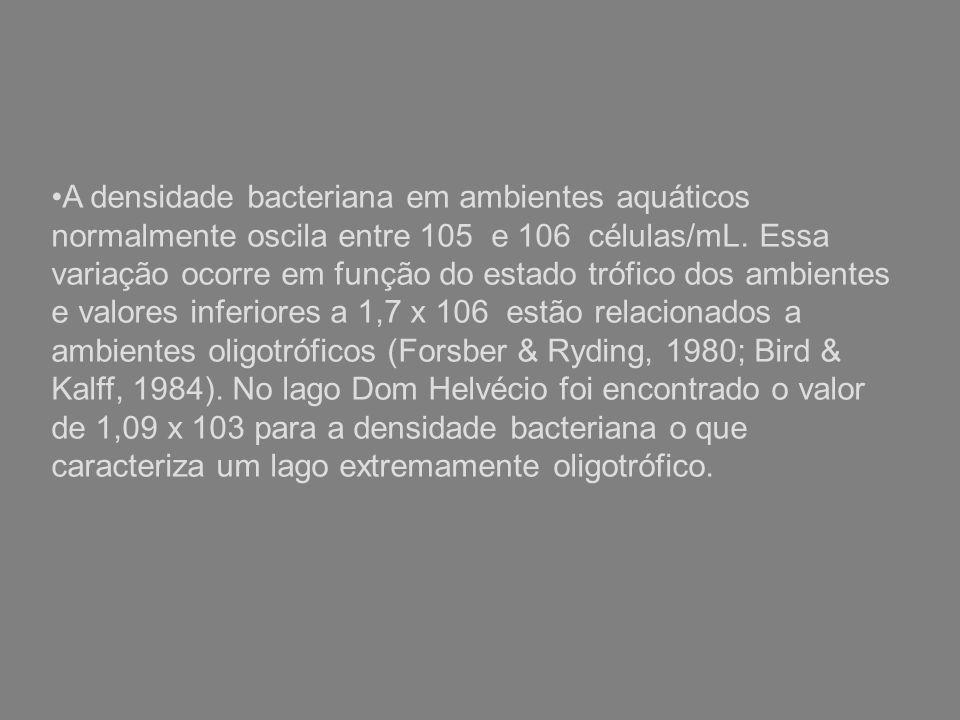 A densidade bacteriana em ambientes aquáticos normalmente oscila entre 105 e 106 células/mL.
