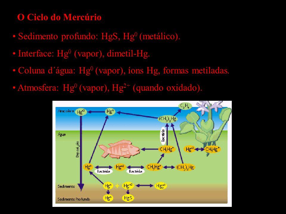 O Ciclo do Mercúrio Sedimento profundo: HgS, Hg0 (metálico). Interface: Hg0 (vapor), dimetil-Hg.