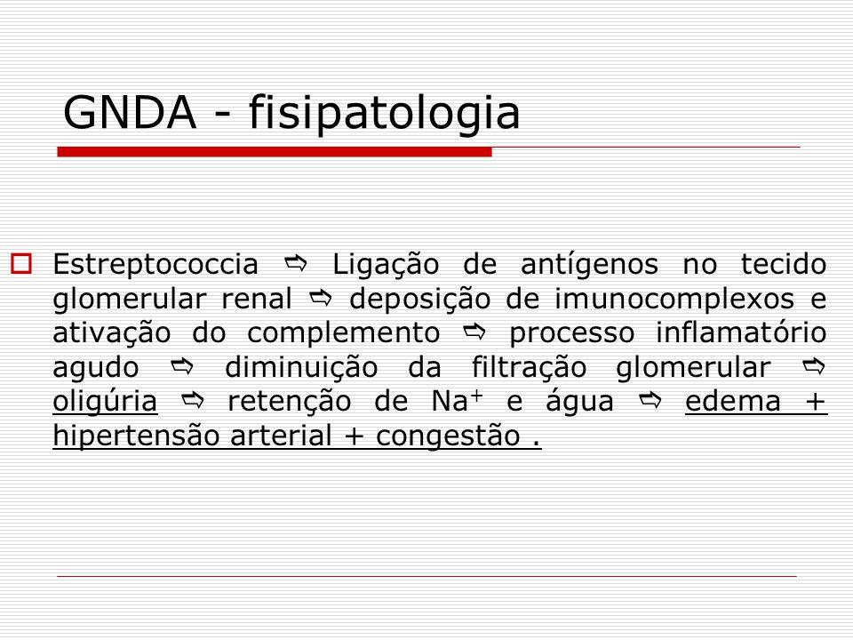 GNDA - fisipatologia