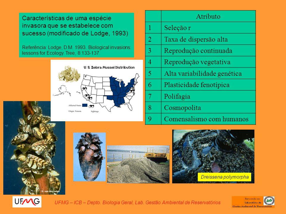 Reprodução continuada 4 Reprodução vegetativa 5