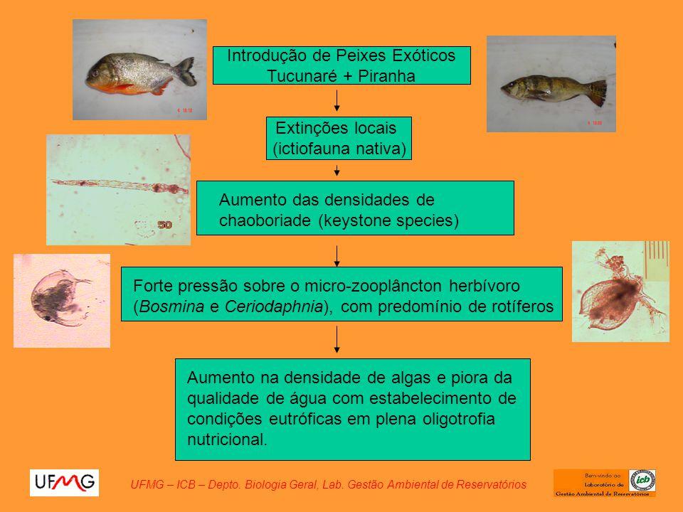 Introdução de Peixes Exóticos