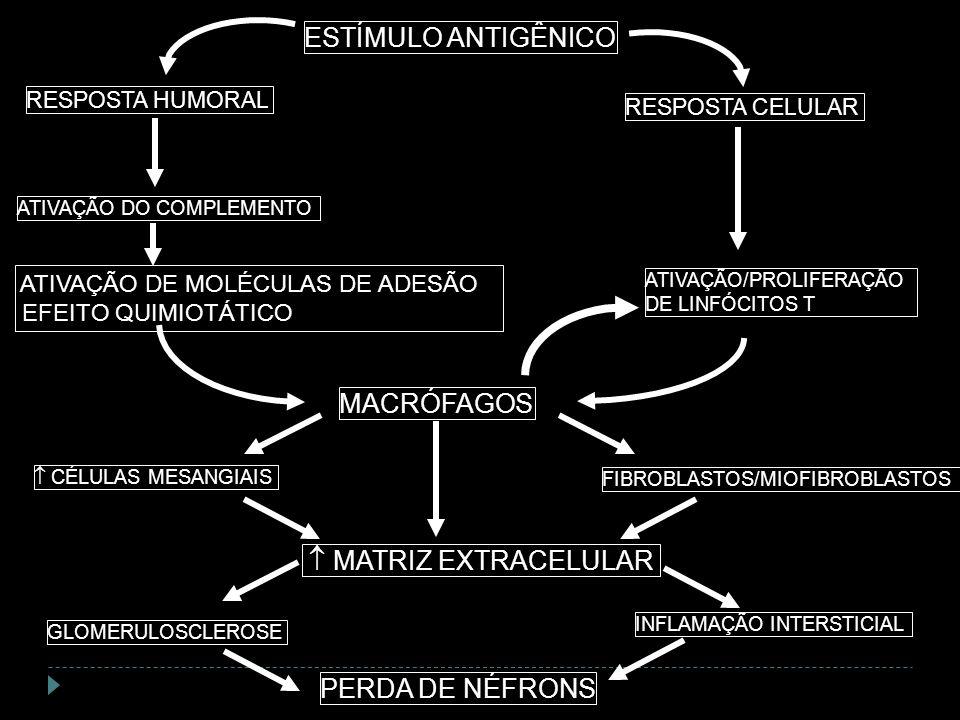 ESTÍMULO ANTIGÊNICO MACRÓFAGOS  MATRIZ EXTRACELULAR PERDA DE NÉFRONS