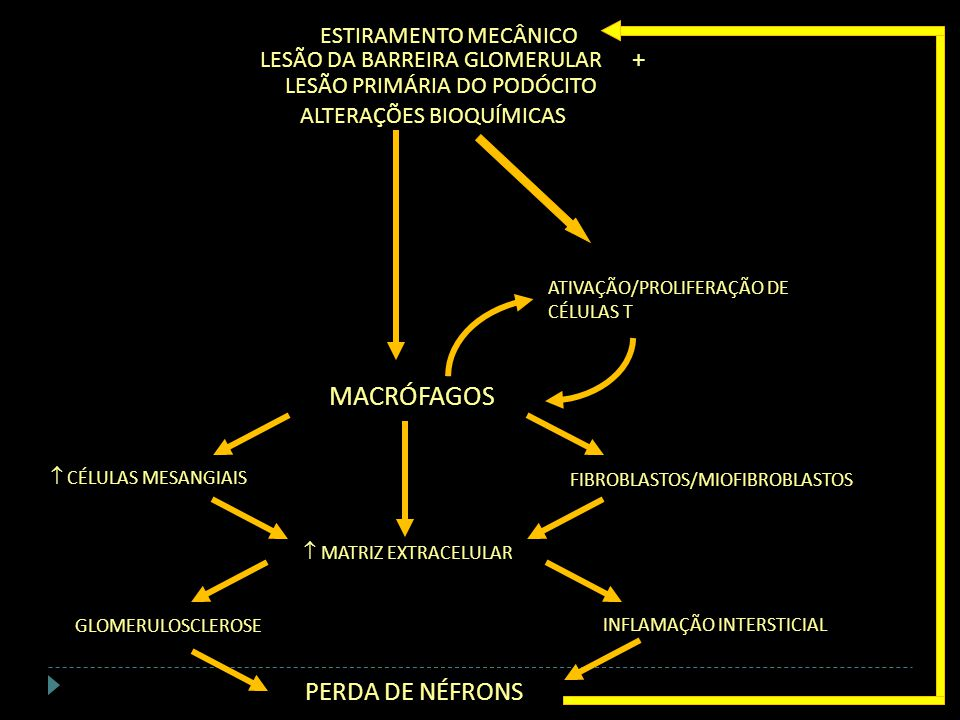 MACRÓFAGOS + PERDA DE NÉFRONS ESTIRAMENTO MECÂNICO