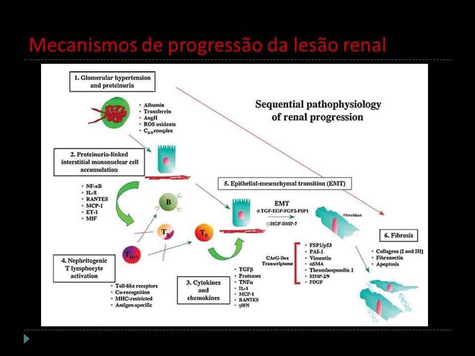 Mecanismos de progressão da lesão renal
