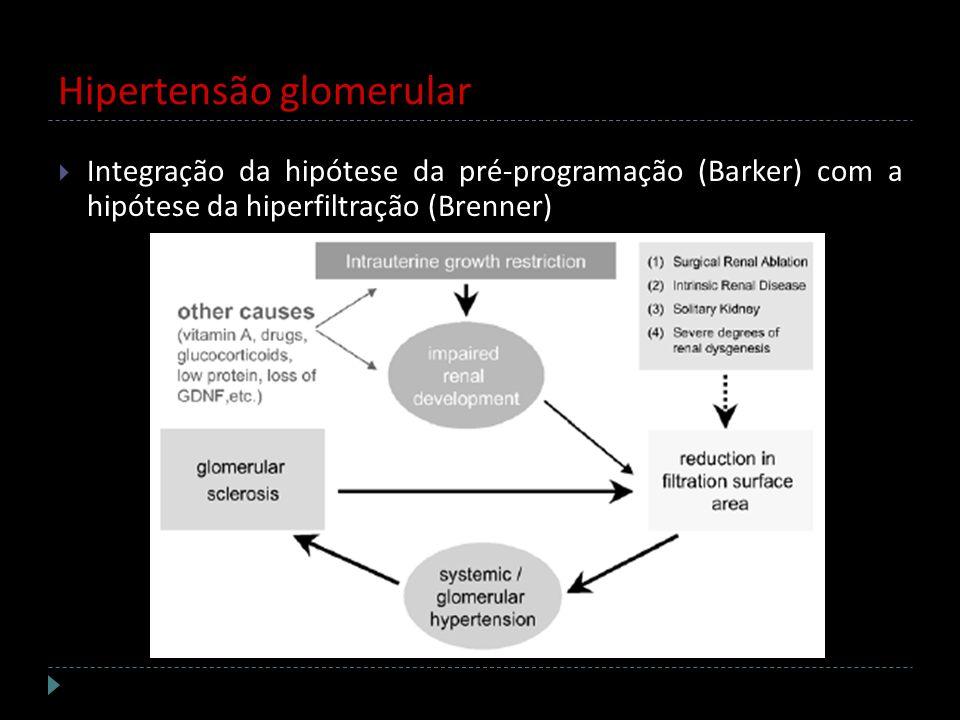 Hipertensão glomerular