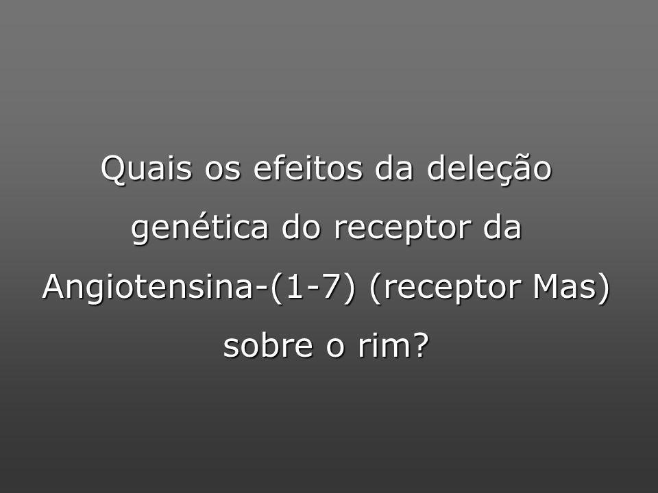 Quais os efeitos da deleção genética do receptor da Angiotensina-(1-7) (receptor Mas) sobre o rim