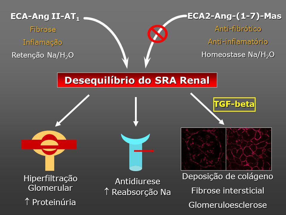 Desequilíbrio do SRA Renal