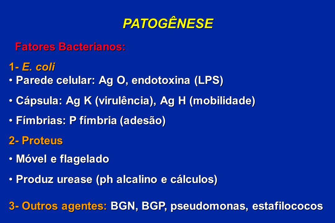 PATOGÊNESE Fatores Bacterianos: 1- E. coli