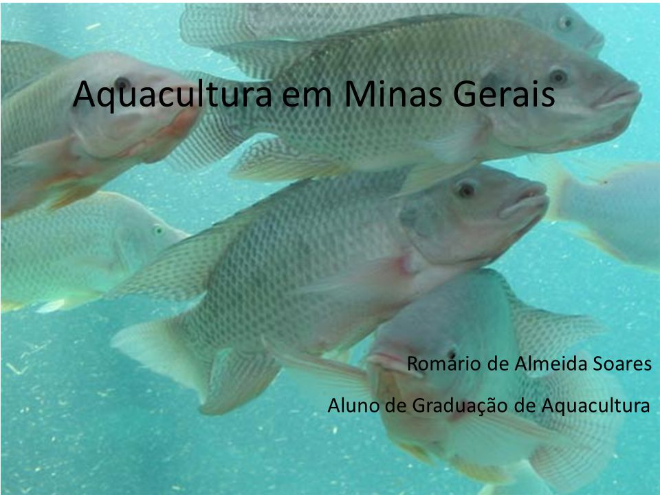 Aquacultura em Minas Gerais