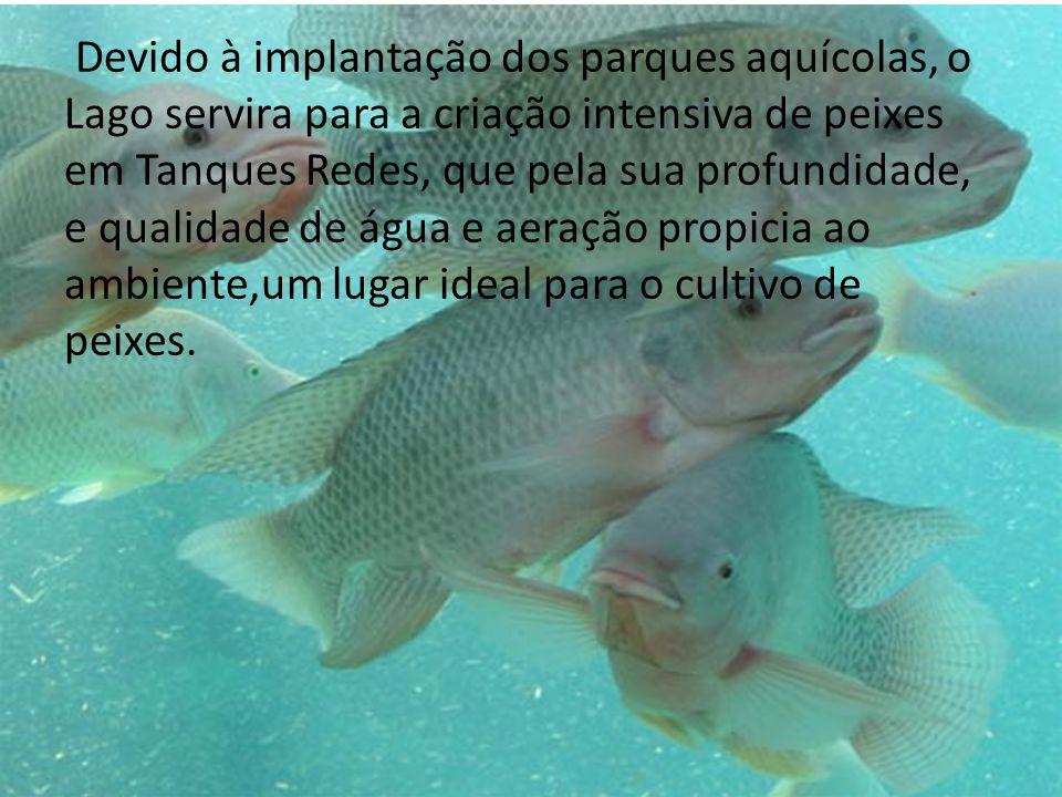 Devido à implantação dos parques aquícolas, o Lago servira para a criação intensiva de peixes em Tanques Redes, que pela sua profundidade, e qualidade de água e aeração propicia ao ambiente,um lugar ideal para o cultivo de peixes.