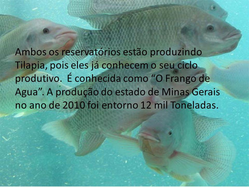 Ambos os reservatórios estão produzindo Tilapia, pois eles já conhecem o seu ciclo produtivo.