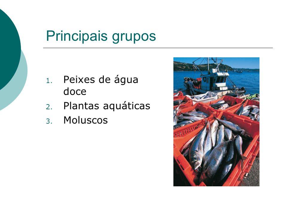 Principais grupos Peixes de água doce Plantas aquáticas Moluscos