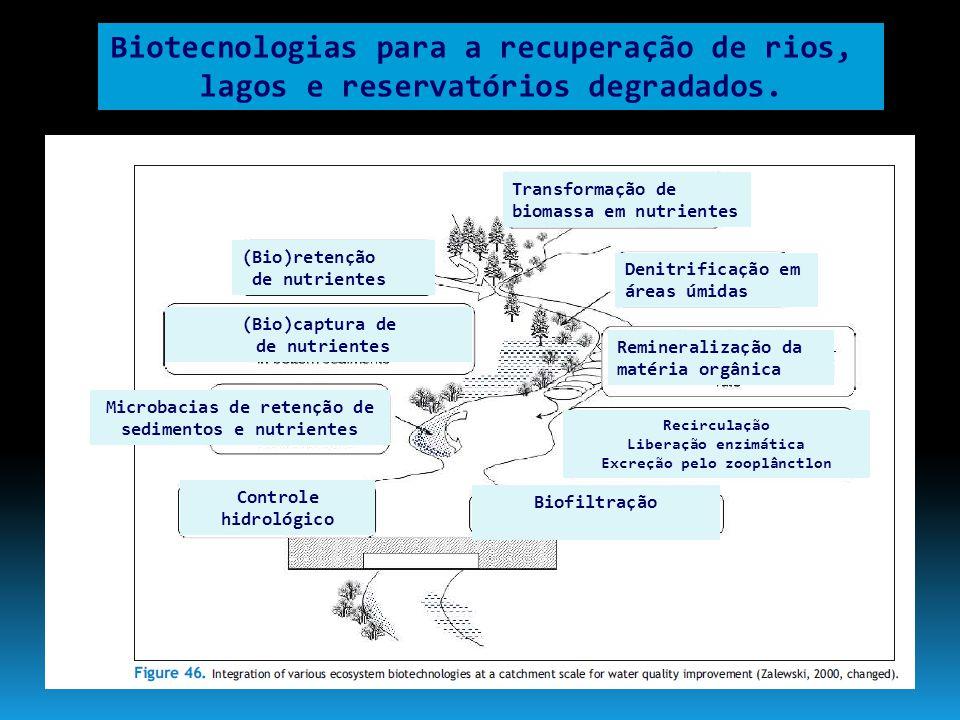 Biotecnologias para a recuperação de rios,
