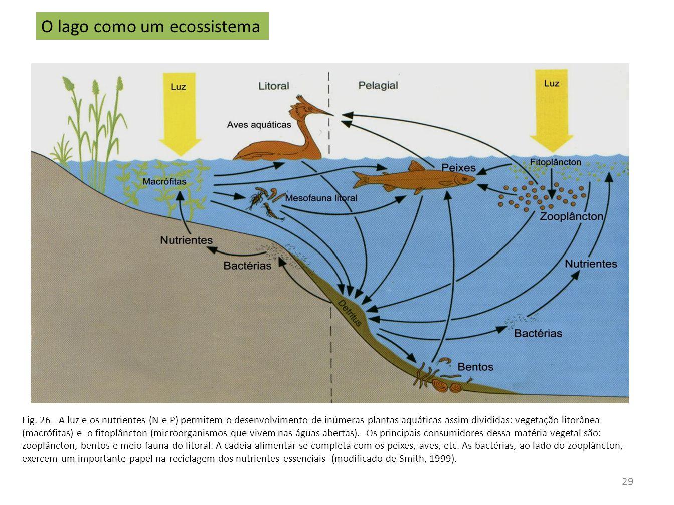 O lago como um ecossistema