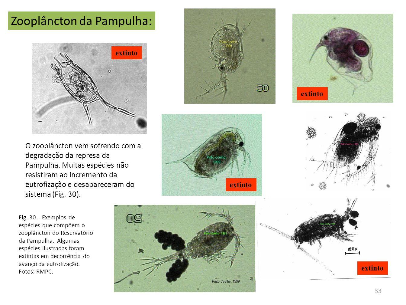 Zooplâncton da Pampulha:
