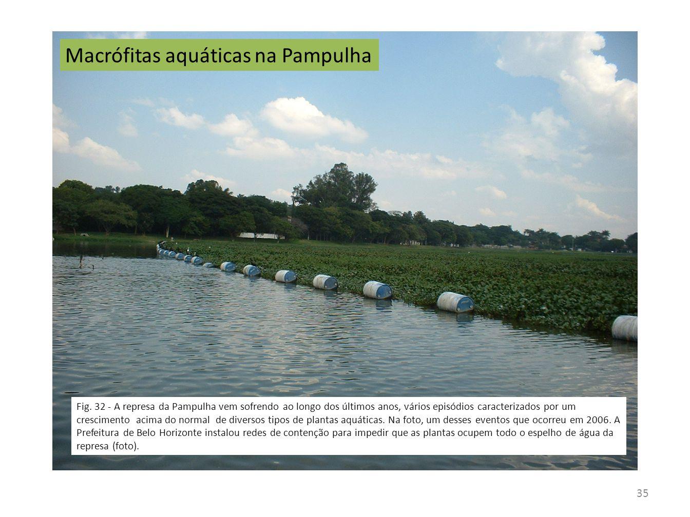 Macrófitas aquáticas na Pampulha