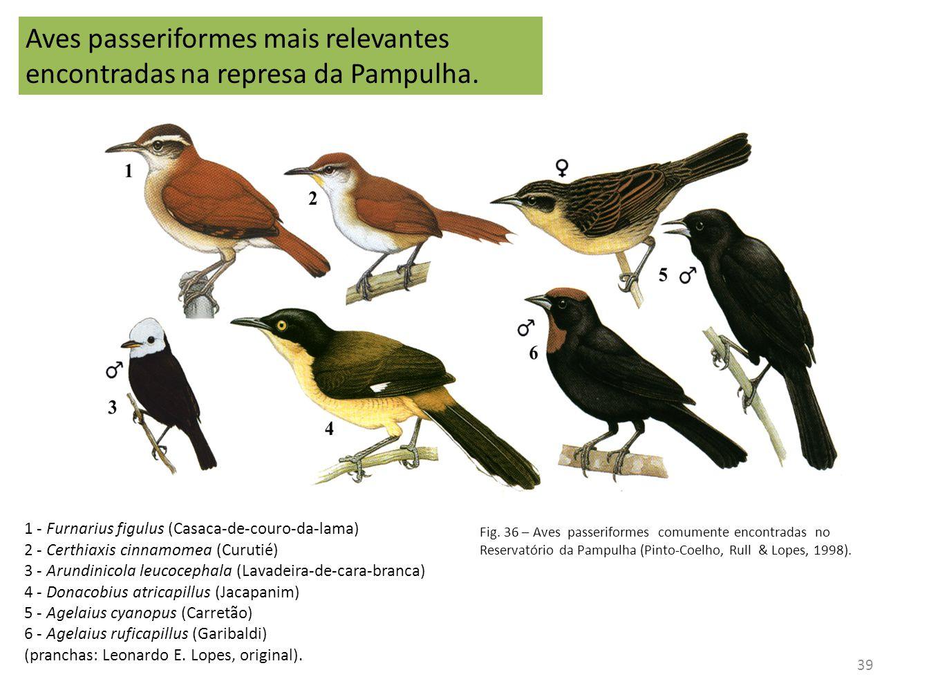Aves passeriformes mais relevantes encontradas na represa da Pampulha.