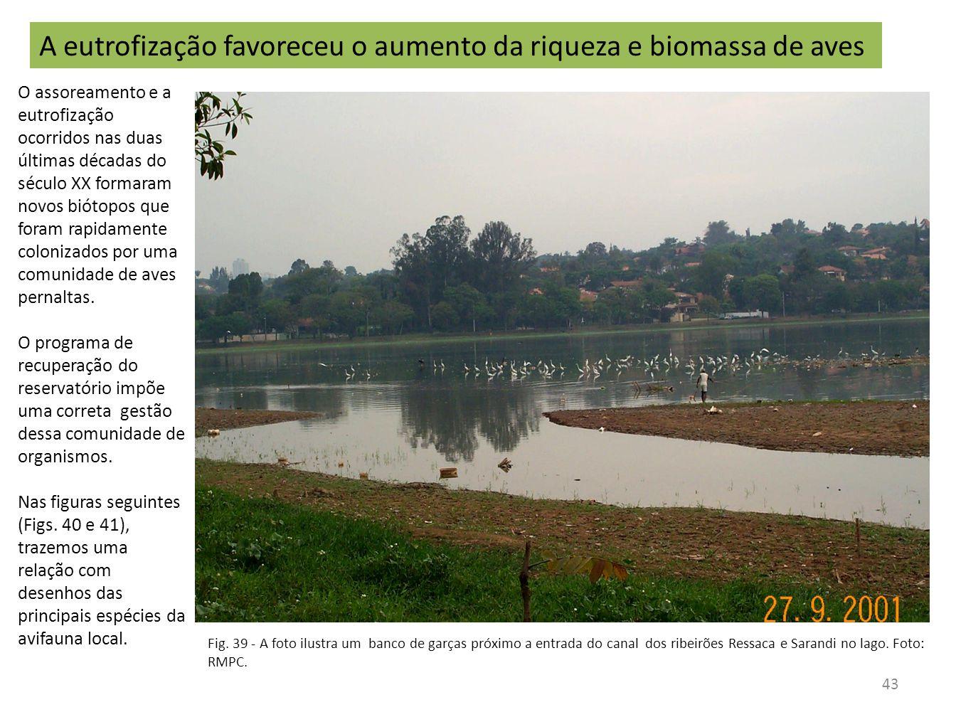 A eutrofização favoreceu o aumento da riqueza e biomassa de aves