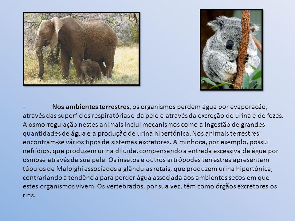 - Nos ambientes terrestres, os organismos perdem água por evaporação, através das superfícies respiratórias e da pele e através da excreção de urina e de fezes.