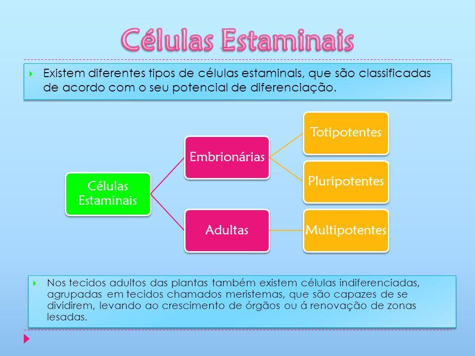 Células Estaminais Células Estaminais Embrionárias Totipotentes