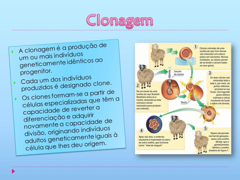 Clonagem A clonagem é a produção de um ou mais indivíduos geneticamente idênticos ao progenitor.