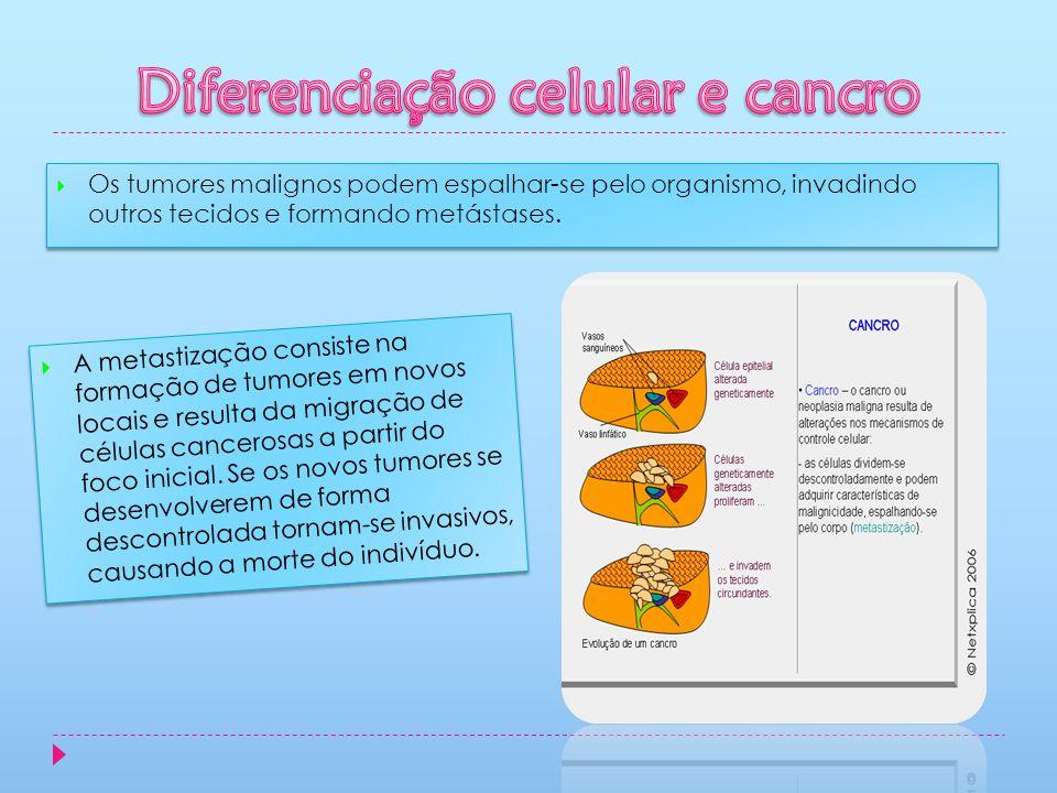 Diferenciação celular e cancro