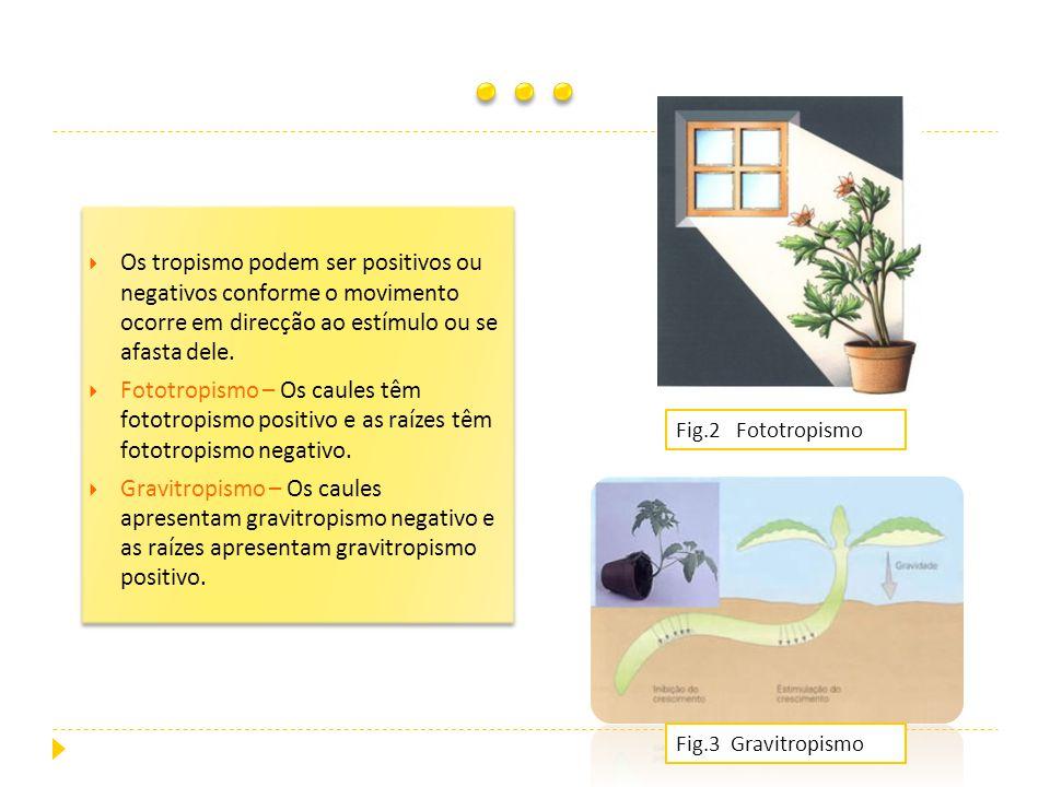 … Os tropismo podem ser positivos ou negativos conforme o movimento ocorre em direcção ao estímulo ou se afasta dele.