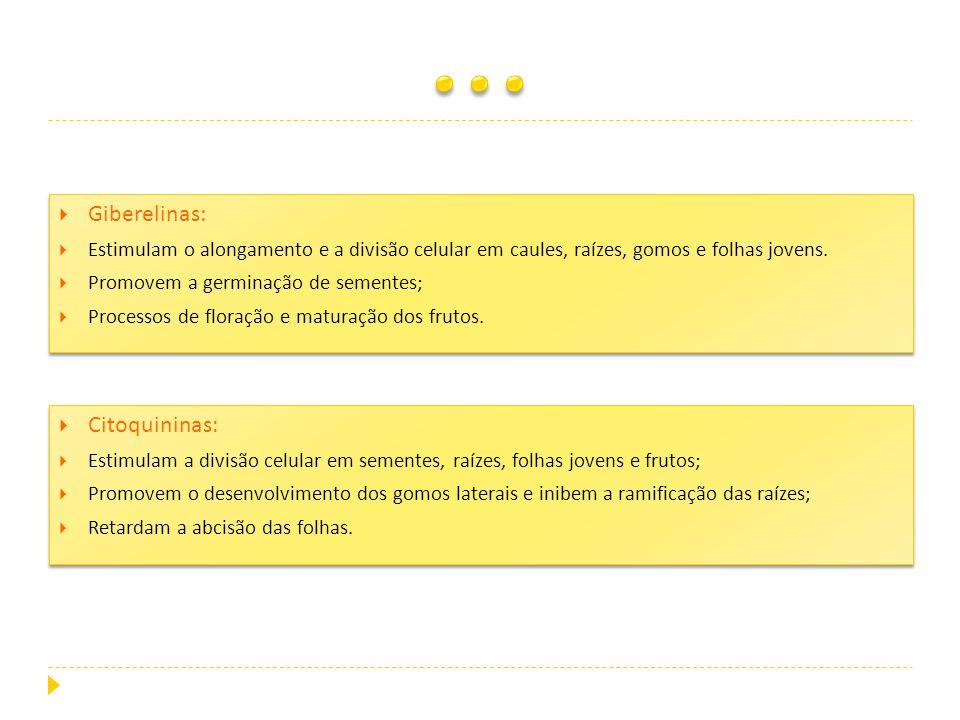 … Giberelinas: Citoquininas: