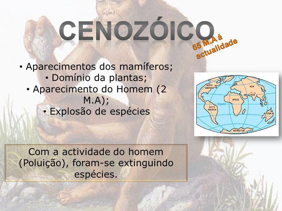 Cenozóico Aparecimentos dos mamíferos; Domínio da plantas;