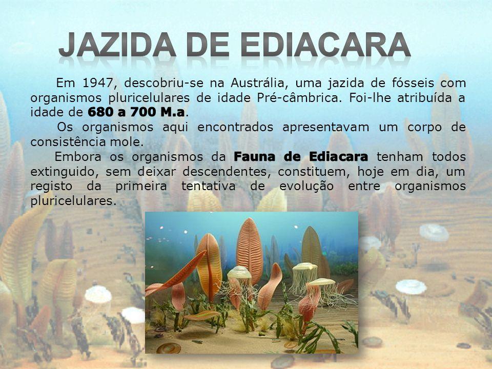 Jazida de Ediacara