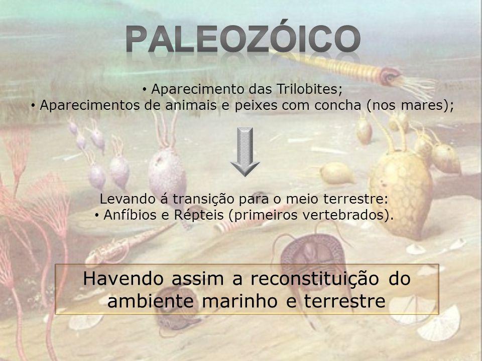 Paleozóico Aparecimento das Trilobites; Aparecimentos de animais e peixes com concha (nos mares); Levando á transição para o meio terrestre: